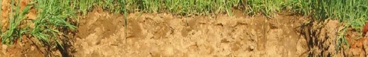 Prairies temporaires, profil pédologique.