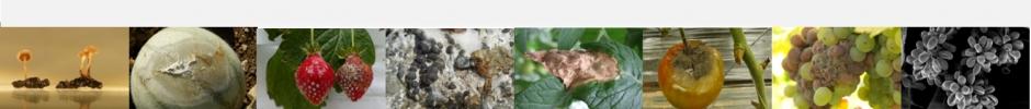 Welcome to BotrySclero2021 webinar  - AVIGNON - FRANCE - June 08-11, 2021