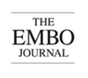 EMBO_journal.png