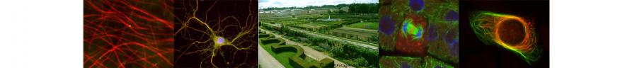 bandeau 3èmes Journées du Réseau France Microtubules