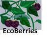 RTEmagicC_ecoberries200.jpg