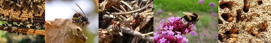 Congres Insectes sociaux 2019 (UIEIS)