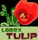 logo_tulip
