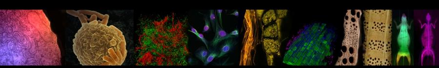 Bienvenue sur le site des journées scientifiques et techniques du réseau des microscopistes de l'Inra