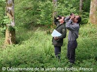 Forest Observers